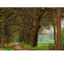 Just another early spring walk Photographic Print