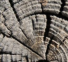 Tree Rings by ChrisTographer
