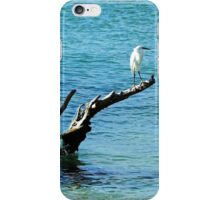 Snowy Perched On Driftwood iPhone Case/Skin