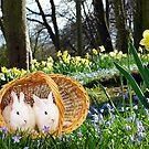Spring Bunnies by Morag Bates