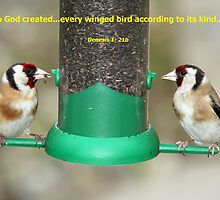 Goldfinches  by Sandy Sutherland