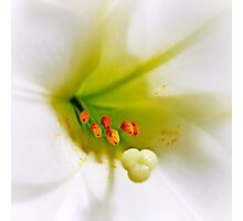 Gracious as sunshine, sweet as the dew Photographic Print