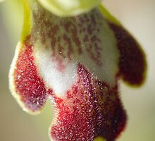 Orchid 1 by MASF