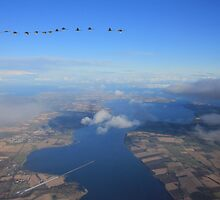 Cromarty Firth with Whooper Swans by Sandy Sutherland