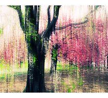 Cherry Tree Impressions Photographic Print