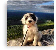 Mountain Pup Canvas Print