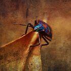 Cotton Harlequin Bug on Golden Leaf by © Karin (Cassidy) Taylor