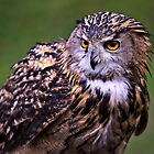 Owl by Nordic-Photo