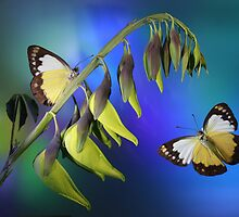 Birds and Butterflies by Jim Frazier