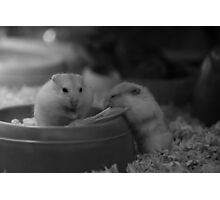 Hamsters Enjoying the Twillight Photographic Print