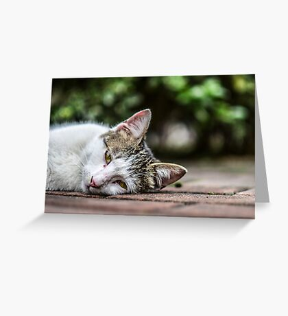 Drowsy Kitten Greeting Card