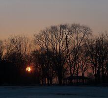 Sunrise Walk Through the Park by Georgia Mizuleva