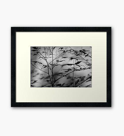 ~ nandina ~ Framed Print