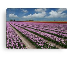 Tulips on Flakkee Canvas Print