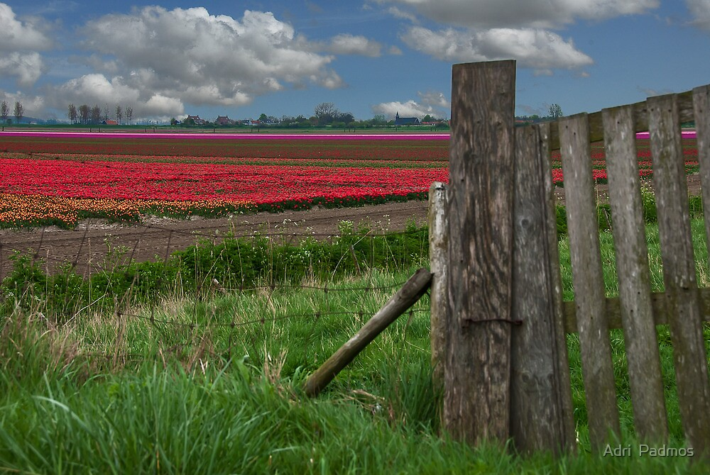 Spring on Flakkee by Adri  Padmos