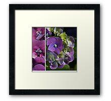 Hydrangeas Of Summer Framed Print