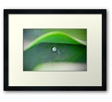 drop of water Framed Print