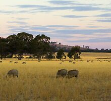 landcape victoria country side by Brian Northern