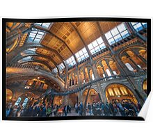 The Natural History Museum Poster
