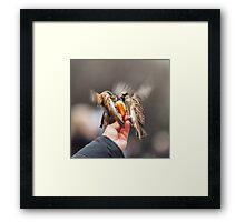 feeding sparrows Framed Print