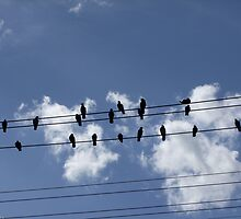 46 Birds On A Wire by mysteriousways