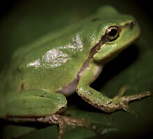 Tree frog © PH. Max Facchinetti  by rootsofriot