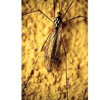 Yellow mosquito N°2 © PH. Max Facchinetti  Photographic Print