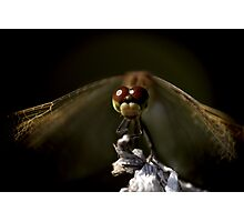 Dragonfly © PH. Max Facchinetti  Photographic Print