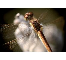 Dragonfly N°2 © PH. Max Facchinetti  Photographic Print