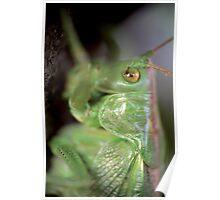 Grasshopper portrait © PH. Max Facchinetti  Poster