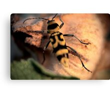 Bug in the sunset © PH. Max Facchinetti  Canvas Print