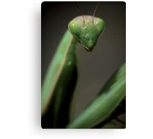 Praying mantis portrait © PH. Max Facchinetti  Canvas Print