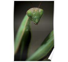 Praying mantis portrait © PH. Max Facchinetti  Poster