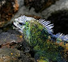 Marine Iguana In The Galapagos Islands Of Ecuador by Al Bourassa