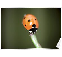 Lonely ladybug © PH. Max Facchinetti  Poster