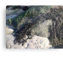 Seaweed On The Rocks At Low Tide Metal Print