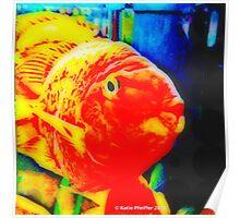 Pop Art Love Fish Poster