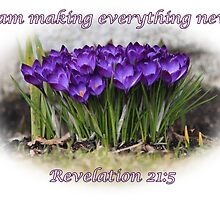 Spring crocuses-Rev. 21:5 by hummingbirds