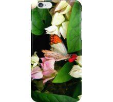 White Orange Tip Butterfly iPhone Case/Skin