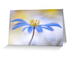 Spring Anemone Greeting Card