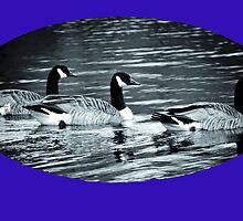 Three Canada Geese ........ by lynn carter