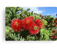 Busy Bee in a Bottle Brush Canvas Print