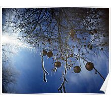 Ice Storm Orchard, Hinesburg, Vermont Poster