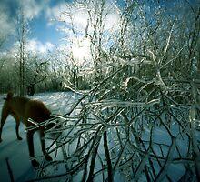 Ice Storm Dog, Hinesburg, Vermont by HagstarStudios