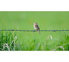 Meadow Lark Photographic Print