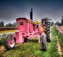 The Pink Tractor At Wooden Shoe Tulip Farm by thomr