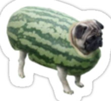 Pug Melon Sticker