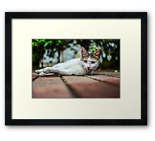 Who Woke Me Up? Framed Print