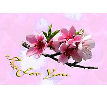 Peach Blossom Just for You Photographic Print