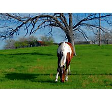 GRAZING HORSE Photographic Print
